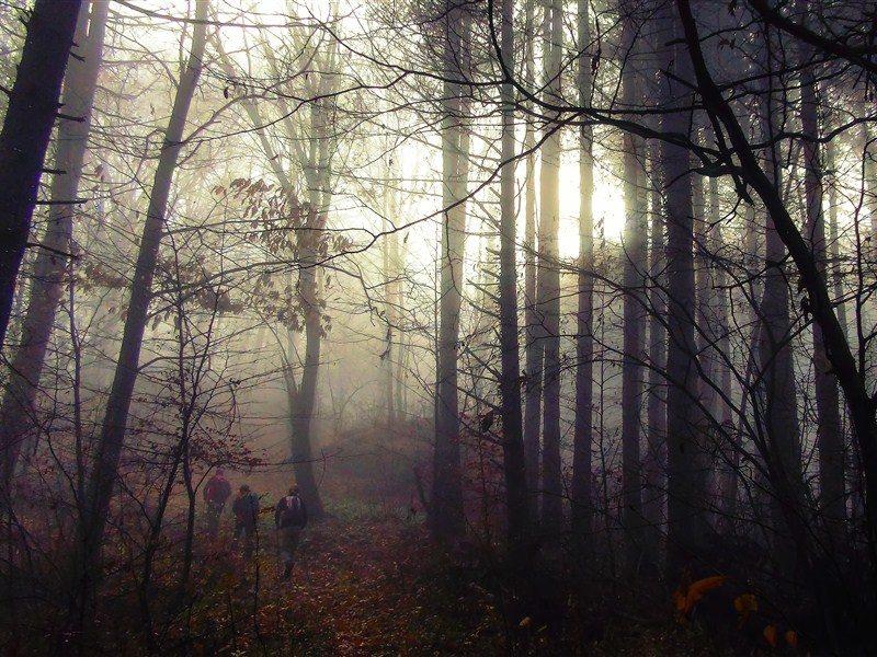 Virgin Forest of Fraktou