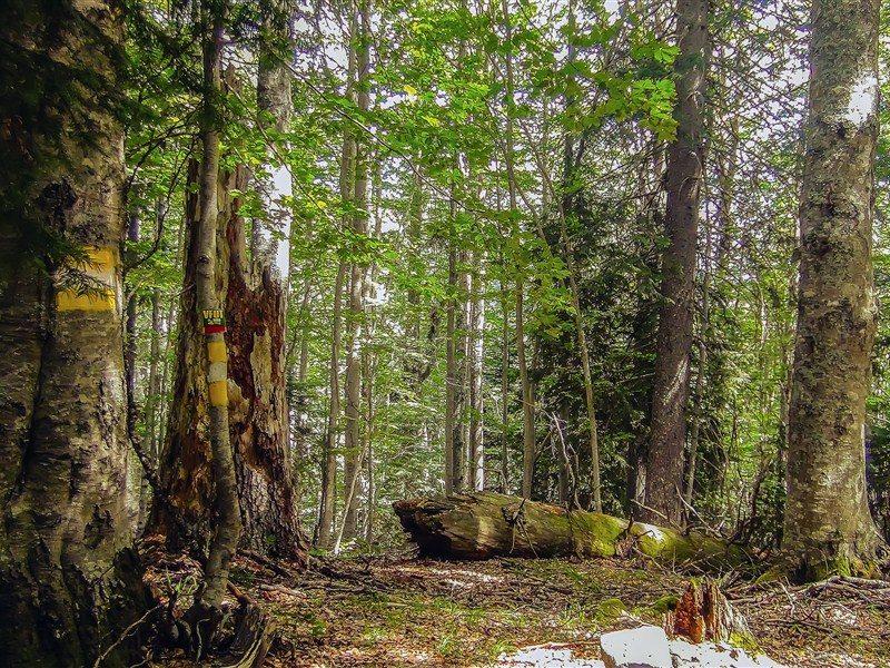 Discover Rodopi Sierra, Virgin Forest of Fraktou